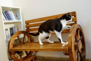 Ailuromania has started hosting cats from a government-run animal shelter in the neighbouring emirate of Ras al Khaimah, hoping to increase adoptions