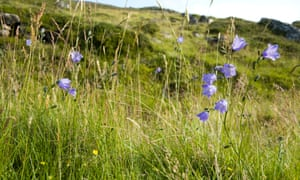 Countryside, Aberdeenshire, Scotland.