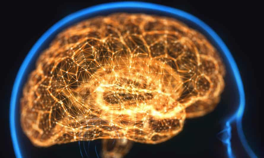 image of human brain