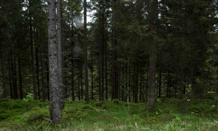 Root and branch solutions … a forest outside Oslo will supply paper for the anthology. Photograph: Kristin von Hirsch/Future Library