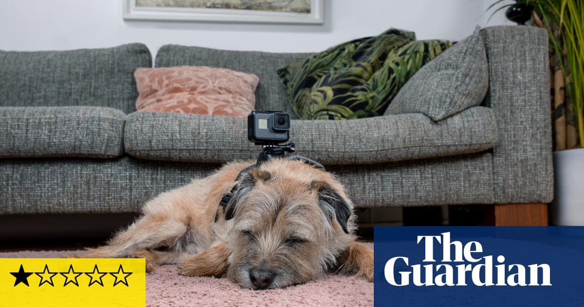 Celebrity Snoop Dogs review – canine Through The Keyhole is a dog's dinner