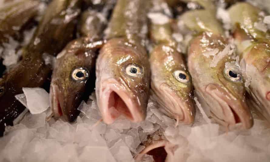 Cod on display at a Scottish fish market