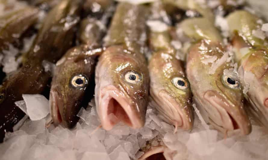 Cod are among the species campaigners say will be under unsustainable pressure.