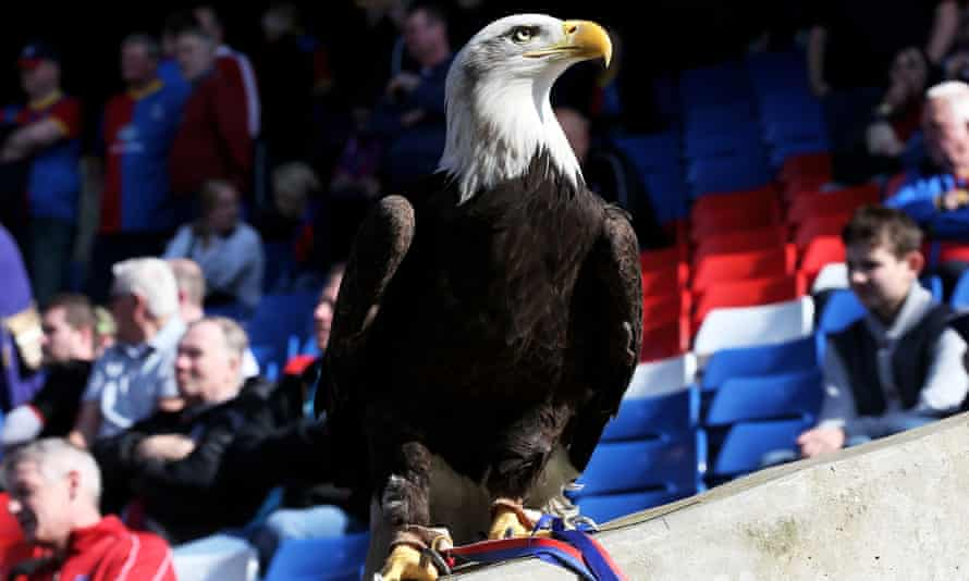 Crystal Palace's mascot, Kayla, sits poised before the match with Chelsea in 2014 – with Eden Hazard looking like ready prey.