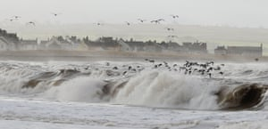Oystercatcher seabirds fly over rough seas at Alonby, on the Cumbrian coast