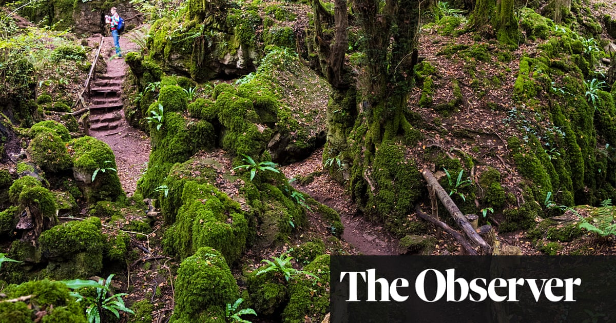 10 British forests getaways – with great places to stay