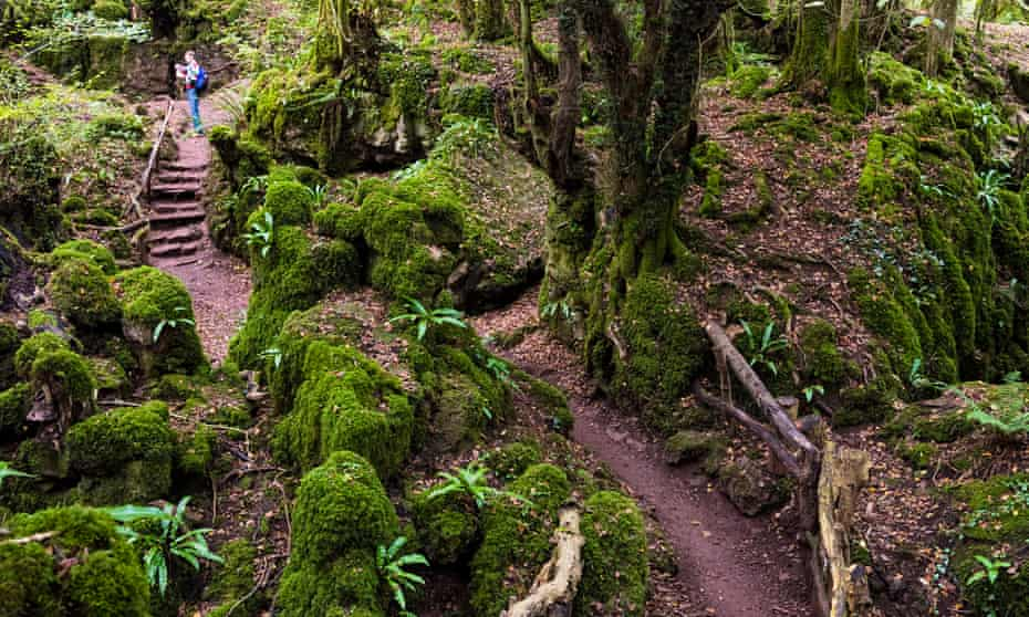 The ancient and mysterious woodland site, Puzzlewood, in the Forest of Dean