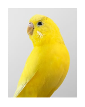 Pineapple. Photograph on archival fibre-based cotton rag paper, 2019 (91 x 72cm).