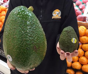 avocado chat for couples