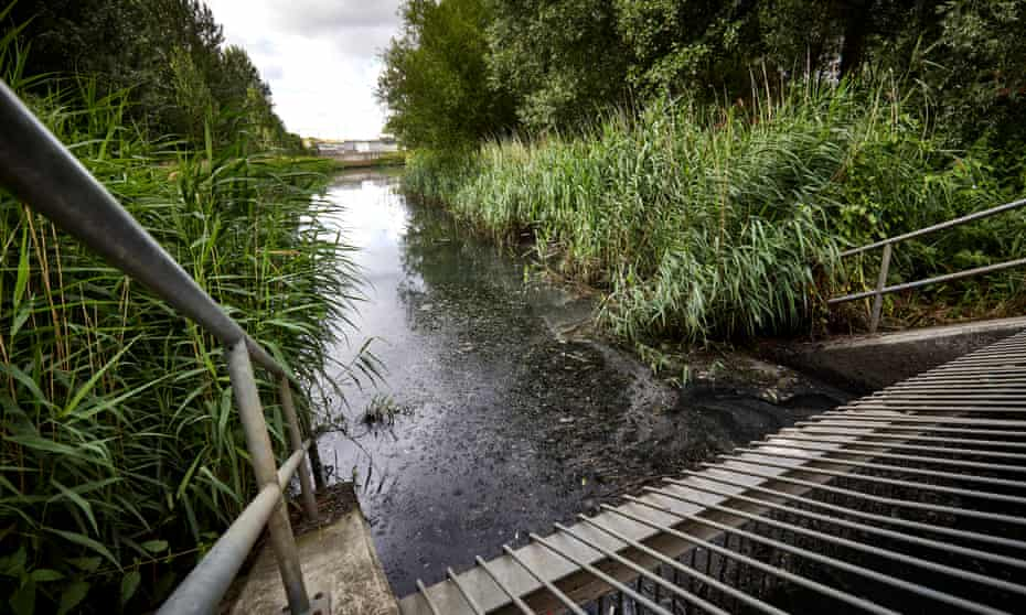 The Olympic Park area of wetlands was created as a legacy project to create a haven for plants, animals and insects.