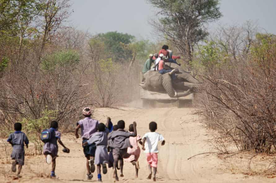 Tractor carrying a dead elephant