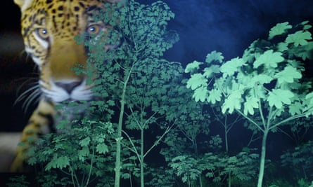 Can't see the big cat for the trees: a still from Jungle-ized