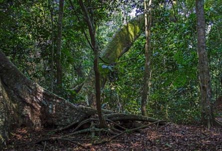 Vegetation in the Zika forest