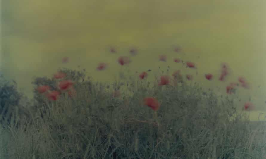 Flowers, Poppies, 2004, by Ori Gersht (detail)