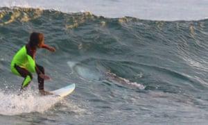 Eden Hasson, 10, surfs as a shark twists away