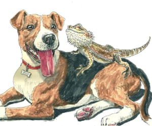 Buster and the lizard