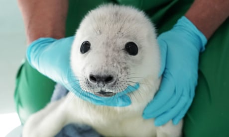 Rescued baby seals and flying water taxis: Thursday's best photos