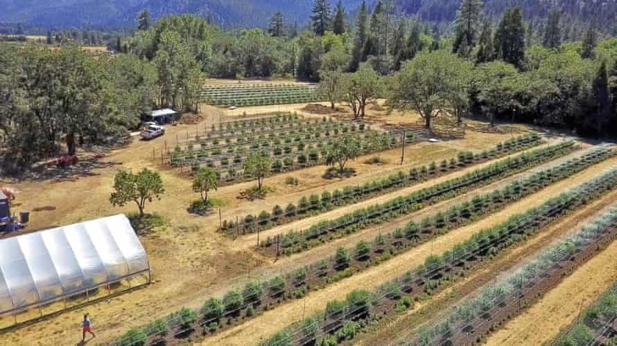 A cannabis crop. 'I think if we let it be a painful moment, and not try to cover it up, we're going to be better off for it.'