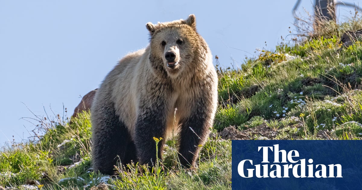 Woman jailed for getting too close to grizzly bear at Yellowstone park