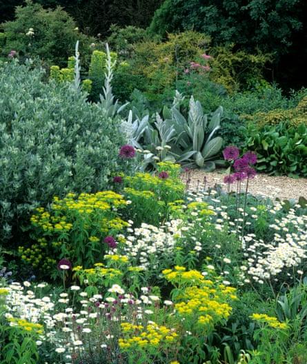 Euphorbia polychroma and allliums.