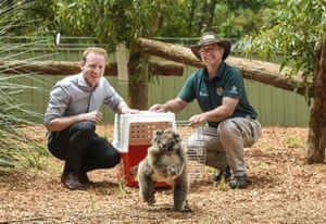 Clelands, Australia: The environment minister, David Speirs, and Cleland Wildlife park vet Ian Hough release koalas Kanga (mother) and Roo (joey) in their new enclosure at Cleland Wildlife Sanctuary