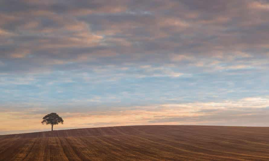 A lone tree on agricultural land in Warwickshire.