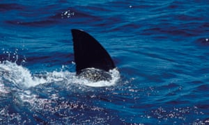 A man in his 20s has survived a shark attack in Western Australia.