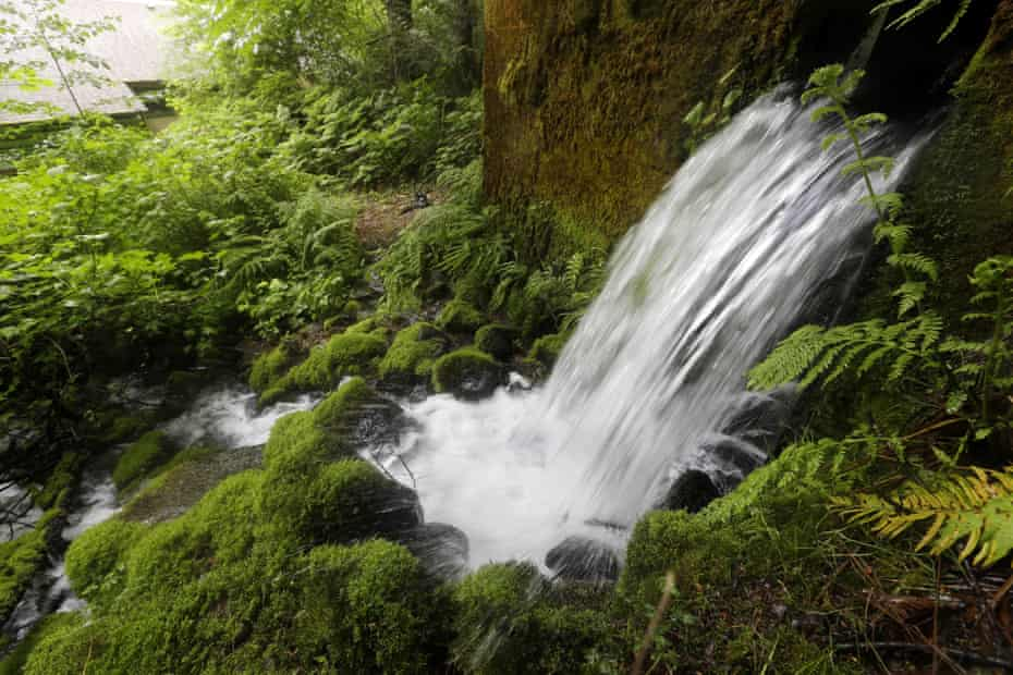 A proposal for Nestlé to build a water bottling plant in Cascade Locks, Oregon, was one of the most heated battles in the state in its 2016 primary.