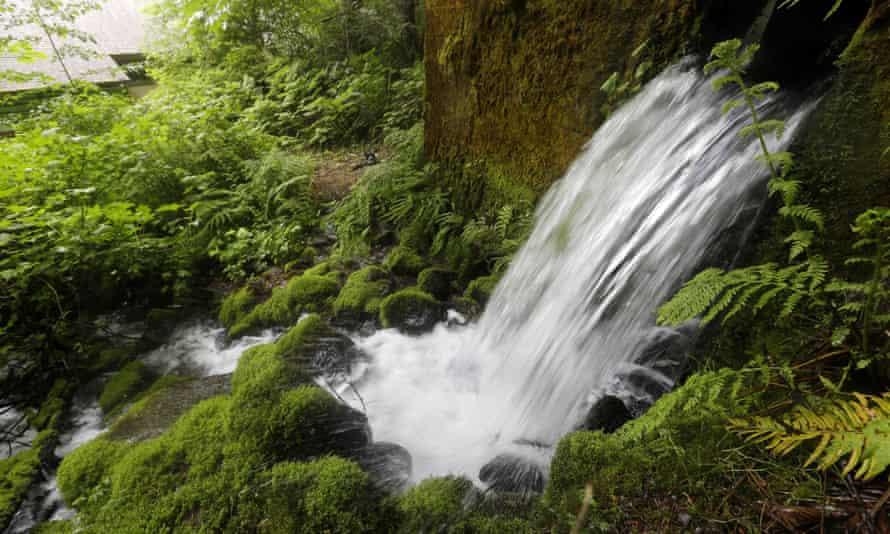 ontario spring water