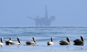 Pelicans float on the water with an offshore oil platform in the background in the Santa Barbara Channel off the coast of California.