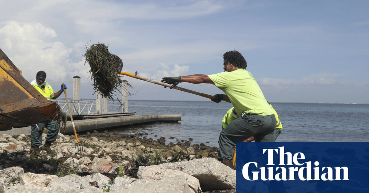 Florida swamped by red tide – but did fertilizer plant spill making it worse?