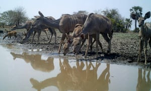 Buck drink at a watering hole in the Gorongosa national park, central Mozambique