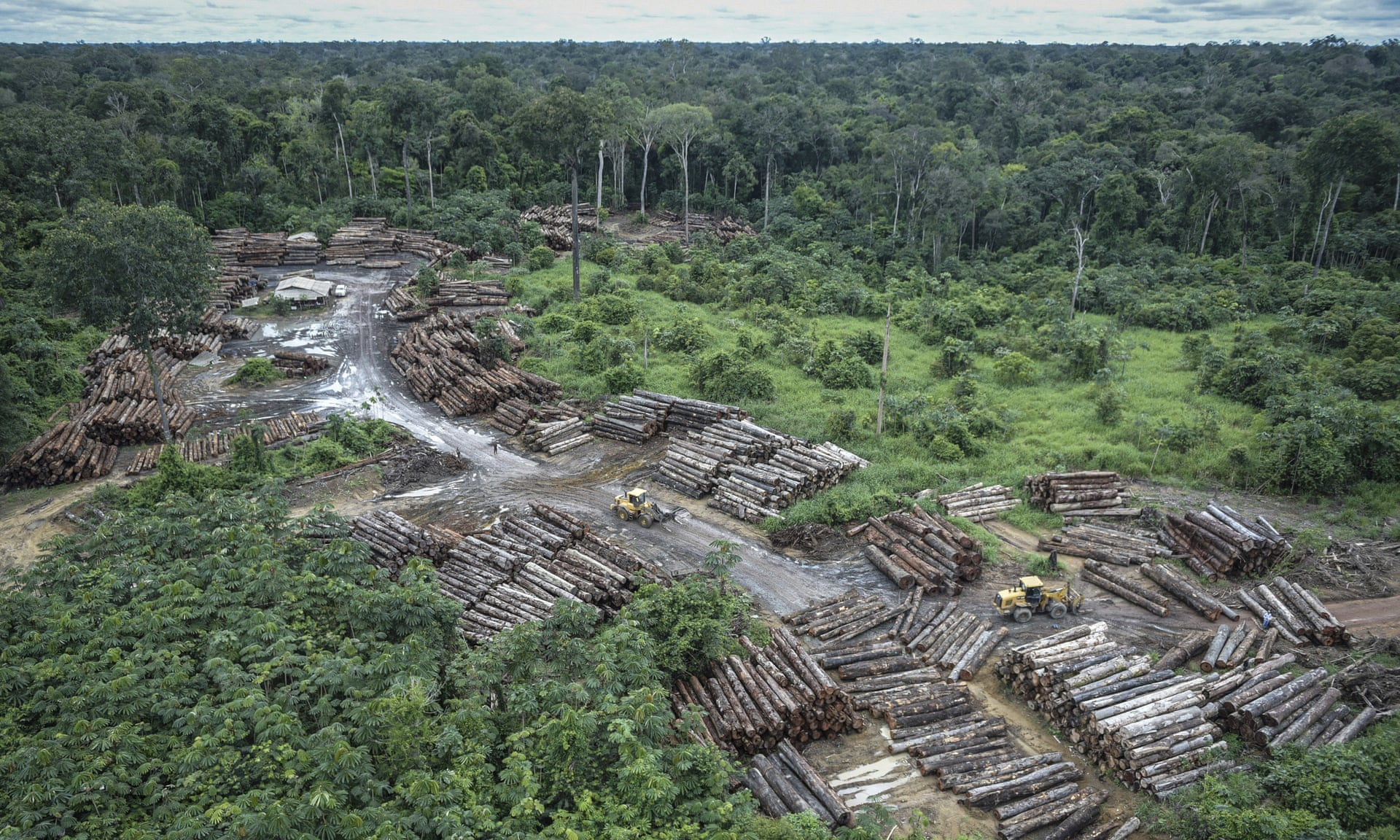 Brazil: huge rise in Amazon destruction under Bolsonaro, figures show