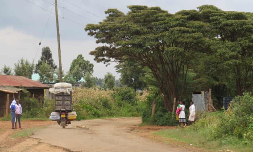 Croton tree on side of village road, Kenya