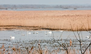 Birds on flood water in Warta Mouth national park in Poland