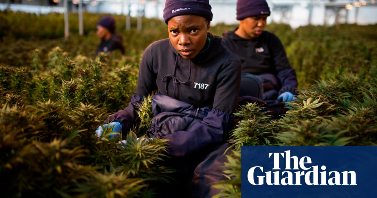 Lesotho firm first in Africa to be granted EU licence for medical cannabis