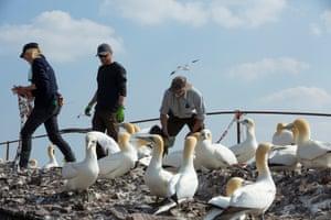 Gannets and work team