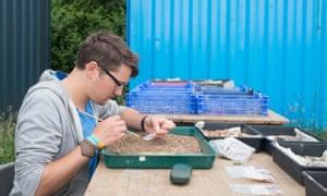 A man sorts Roman finds in a tray in Ipplepen.
