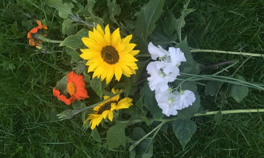 A bunch of colourful tithonia, sweet peas and sunflowers lying on grass