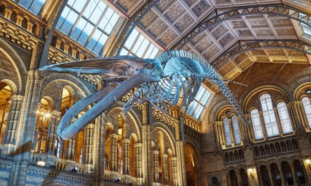 Hintze Hall at the NHM, which the embassy hired for the event.