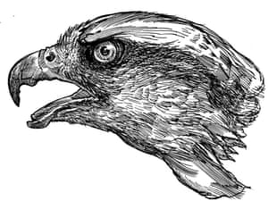 I wanted to create a slightly sinister atmosphere – nature, although very beautiful, is very dark, and it was important to show that cruelty alongside the beauty. Having said that, I had to re-draw the goshawk because it was deemed 'too angry' – it still has a dead bird in its talons, though.
