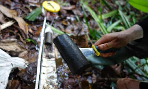 Scientist scrapes peat from the recently discovered peat bog in Congo-Brazzaville.