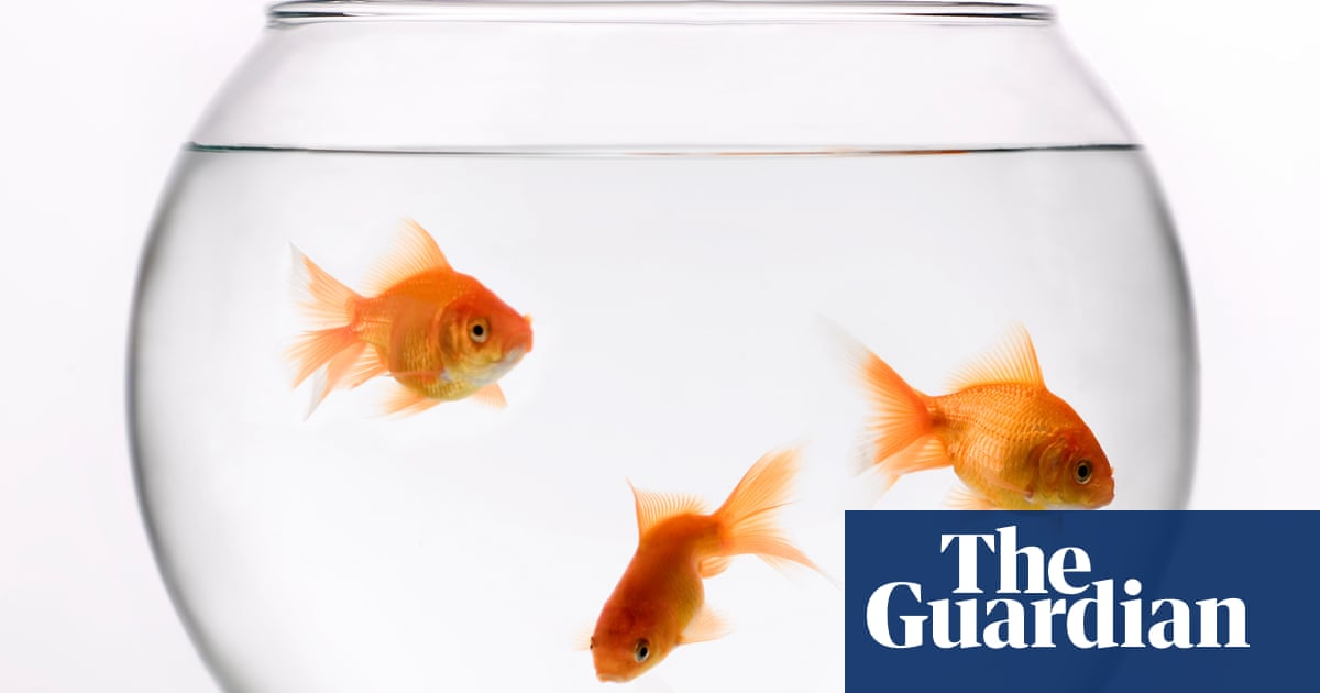Goldfish dumped in lakes grow to monstrous size, threatening ecosystems