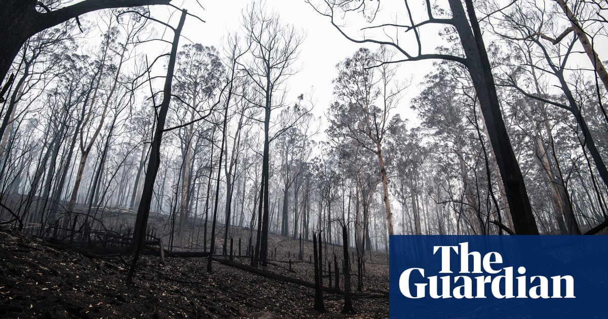 NSW urged to stop logging native forests after fires wipe out up to 30% of timber supply