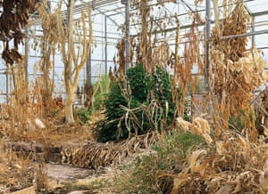 Biospohere 2, one of the largest greenhouses on the planet at the University of Arizona. In the 1990s, for research purposes, two groups of scientists were assigned to live there completely sealed off from the outside world except for communication