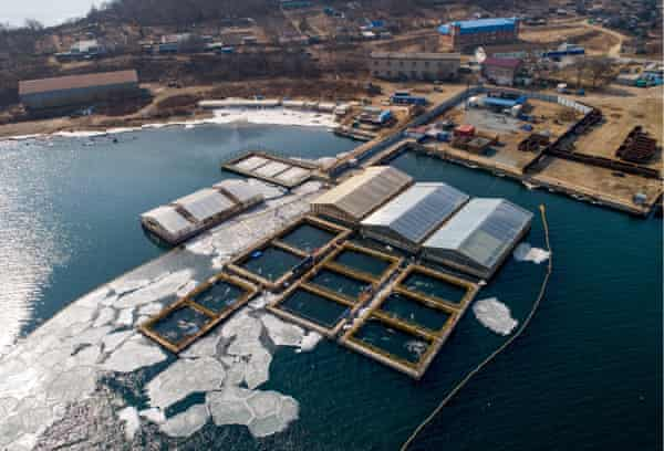 An aerial view of the pools where the whales have been held in cramped enclosures