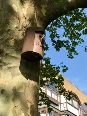 Bird box, Barbican wildlife garden