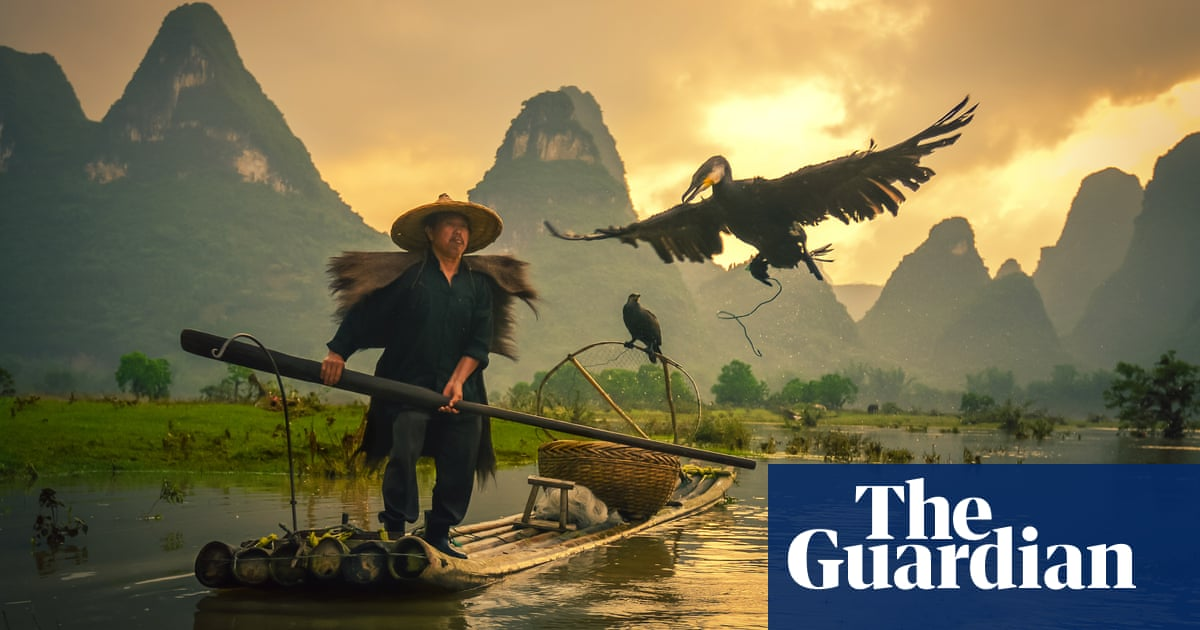 7eb25524 Dying art of Chinese cormorant fishing - in pictures | World news | The  Guardian