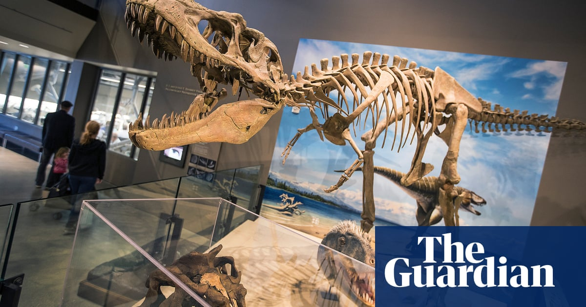 Tyrannosaurs may have hunted in packs like wolves, new research has found