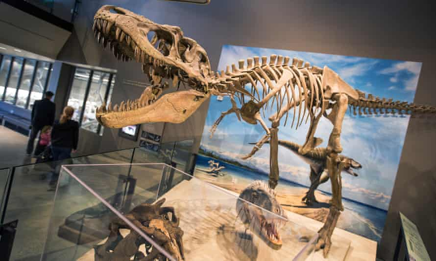 A tyrannosaur skeleton on display at the Natural History Museum of Utah in 2017.